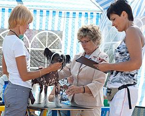 Эксперт дает описание собаки на столе