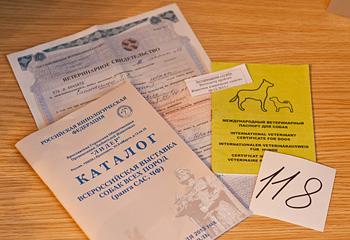 Справка Ф1, ветеринарный паспорт, талон ветконтроля