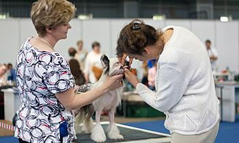 Эксперт осматривает зубы собаки