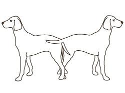 вязка собак - кобель и сука в замке
