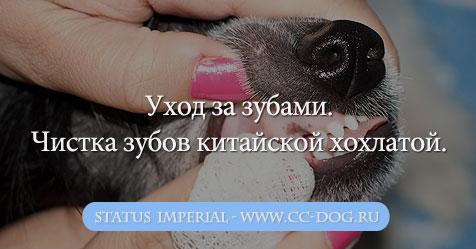 неприятный запах изо рта тонзиллит лечение