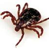 кожные паразиты клещи человека